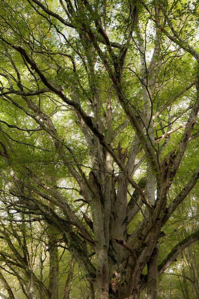 Troncs arbres entrelacs