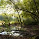 Mare étang contre-jour végétation arbres