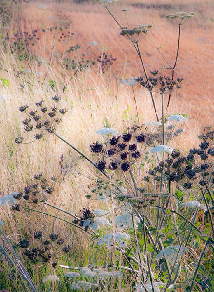 fleurs, bouquets, champs de blés, moissons, campagne